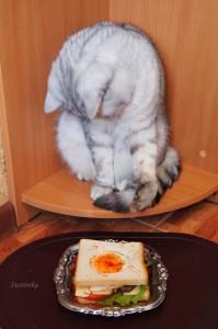 кот и вкусный бутерброд