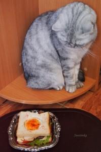 кот и бутерброд